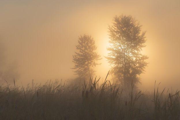 Tan theo sương mù