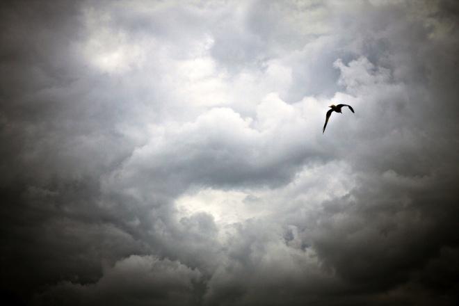Như cánh chim di