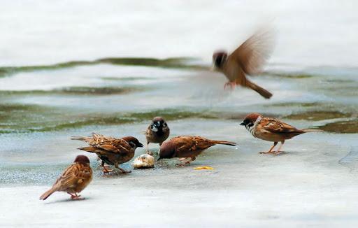 Bầy Chim Trước Hiên Nhà